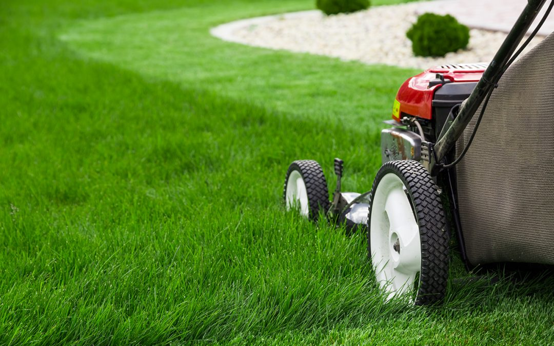 Useful Tips for Effective Summer Lawn Care